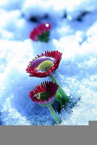 fiori inverno