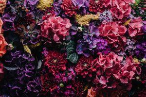 Rita_fiori colorati